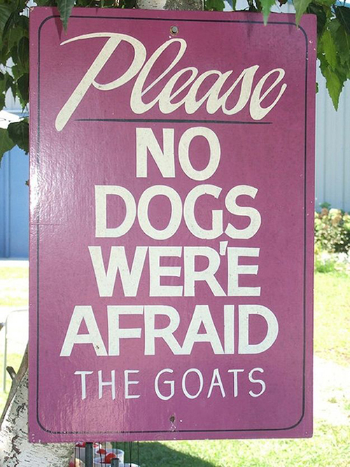 Afraid dogs